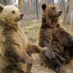 Sanctuarul de urşi Libearty de la Zărneşti: un must see pentru oricine!