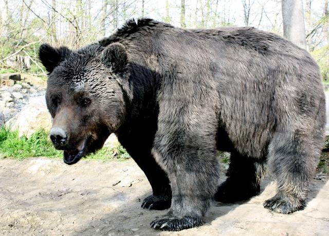 Libearty-sanctuar-ursi-zarnesti-max-01